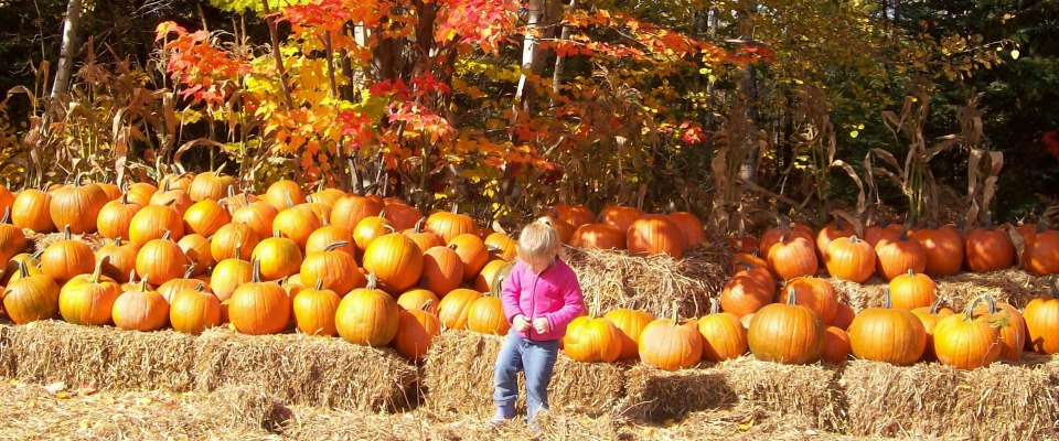 Craig Haven Farms Pumpkin Patch